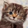 Аватар для Nigmao